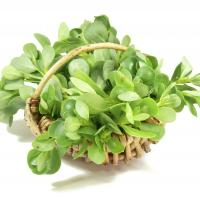 Purslane extract supports blood sugar control