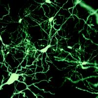 Tools for neuroscience research