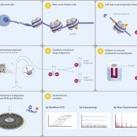 ChIP-seq assay kit for histone methylation