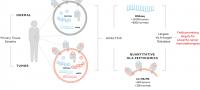 Partnership to develop cancer immunotherapies